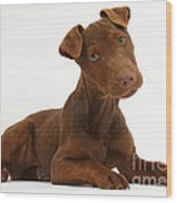 Patterdale Terrier Puppy Wood Print