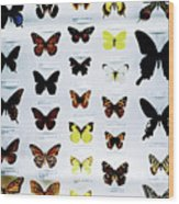 Pattern Made Out Of Many Different Butterfly Species Wood Print