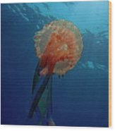 Patterned Luminescent Jellyfish Wood Print by Sami Sarkis