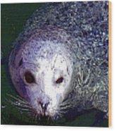 Patterned Seal Wood Print
