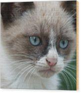 Pauls Little Cat Wood Print