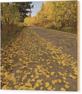 Paved In Gold Wood Print