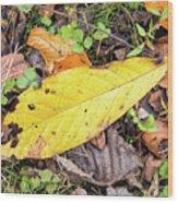 Paw Paw Leaf Fall Colors Wood Print