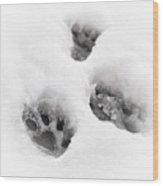 Paw Print  Wood Print by Tom Gowanlock