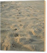 Paw Prints In The Sand Wood Print