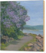 Paulownia Along The Nyack Trail Wood Print