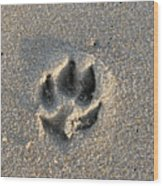 Pawprint In The Sand Wood Print
