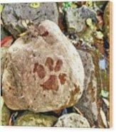 Paws On The Rocks Wood Print