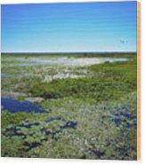 Paynes Prairie View Wood Print