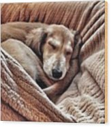 Peace At Last #saluki Wood Print