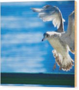 Peace Gull Wood Print