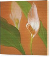 Peace Lily Grace 10 Wood Print