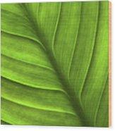 Peace Lily Leaf Wood Print