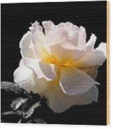 Peace Rose Inner Light Wood Print