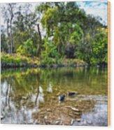 Peaceful Morning On Cibolo Creek Wood Print