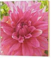 Peacefully Pink At Dawn Wood Print