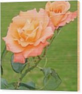 Peach And Gold Roses Wood Print