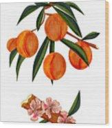 Peach And Peach Blossoms Wood Print