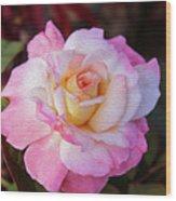 Peach And White Rose Wood Print