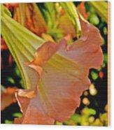 Peach Angel's Trumpet At Pilgrim Place In Claremont-california Wood Print
