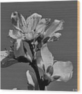 Peach Blossoms In Grayscale Wood Print