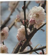 Peach Blossoms In Spring Wood Print