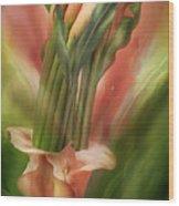 Peach Calla Lilies In Calla Vase Wood Print