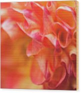 Peach Color Dahlia Wood Print