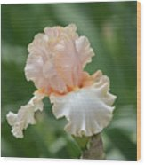 Peach Color Iris Wood Print