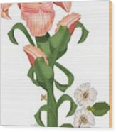 Peach Colored Iris Botanical Wood Print