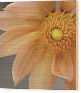 Peach Dahlia Wood Print