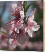 Peach Embrios Wood Print