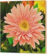 Peach Gerbera Daisy Wood Print
