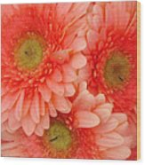 Peach Gerbers Wood Print
