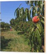 Peach Grove Wood Print