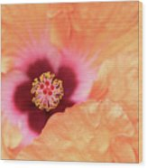 Peach Hibiscus - Macro Wood Print