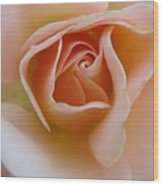 Peach Mini Rose Wood Print