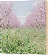 Peach Orchard 4 Wood Print