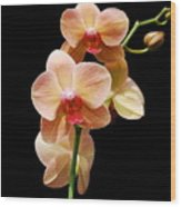 Peach Orchids Wood Print