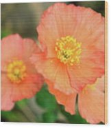 Peach Poppies Wood Print