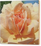 Peach Rose Art Prints Roses Flowers Giclee Prints Baslee Troutman Wood Print