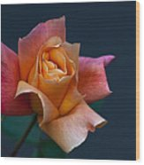 Peach Rose Bud Wood Print