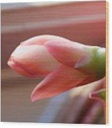 Peach Succulent Wood Print
