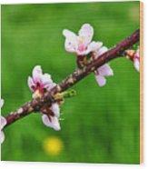 Peach Tree Blossoms Wood Print