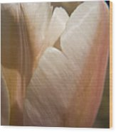 Peach Tulip Wood Print