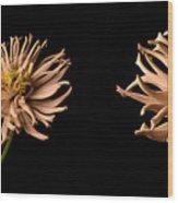 Peach Zinnia Diptych Wood Print