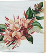 Peachy Ixora Wood Print