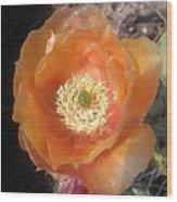 Peachy Opuntia Flower Wood Print