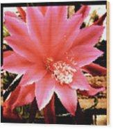 Peachy Pink Cactus Orchid Wood Print