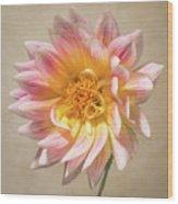 Peachy Pink Dahlia Close-up Wood Print